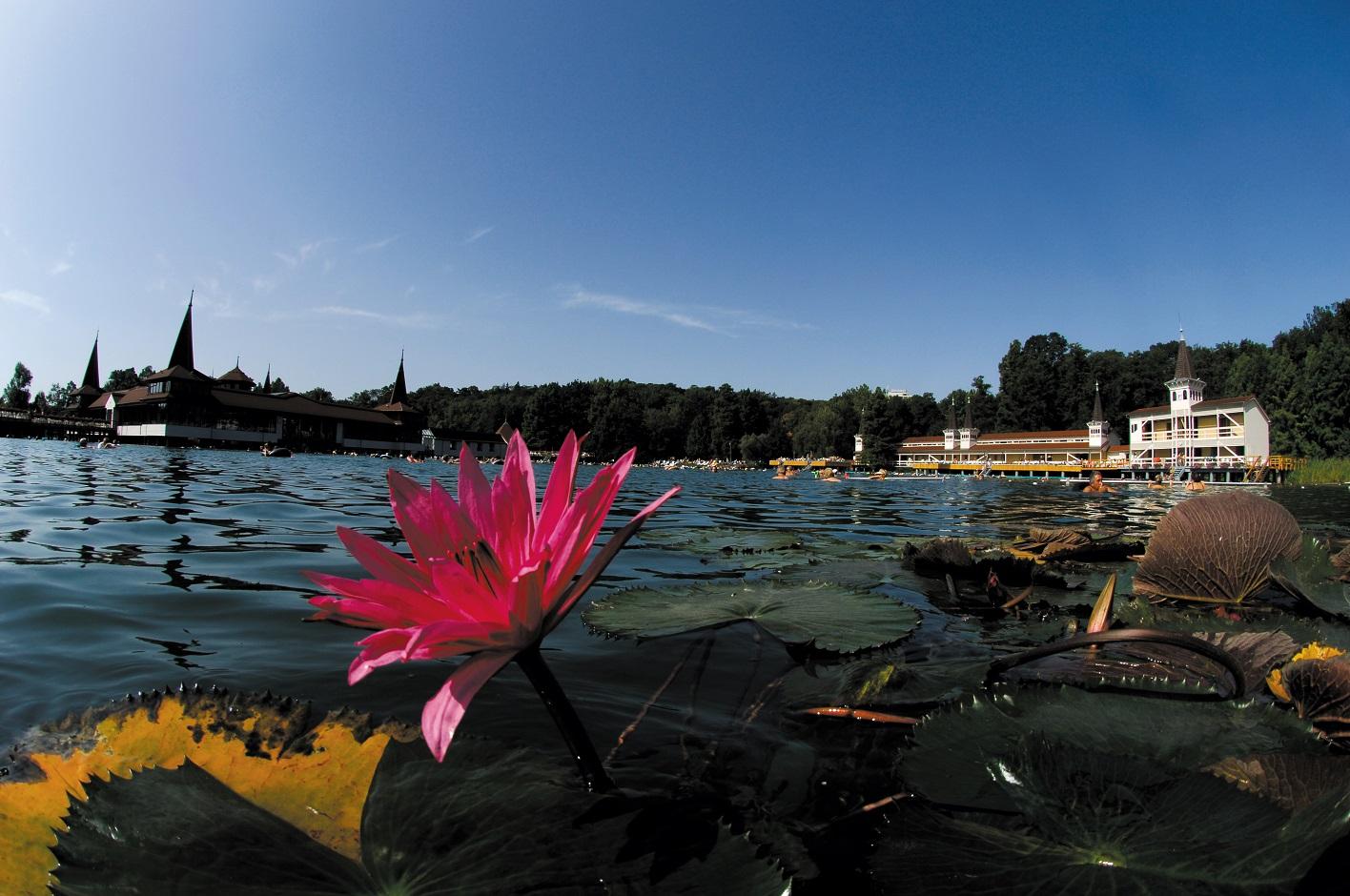 Heviz lake bath flower bathhouse