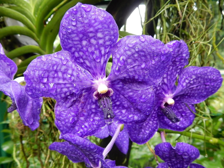 Orchidea Szingapúr növényegészségügyi bizonyítvány határellenőrzés