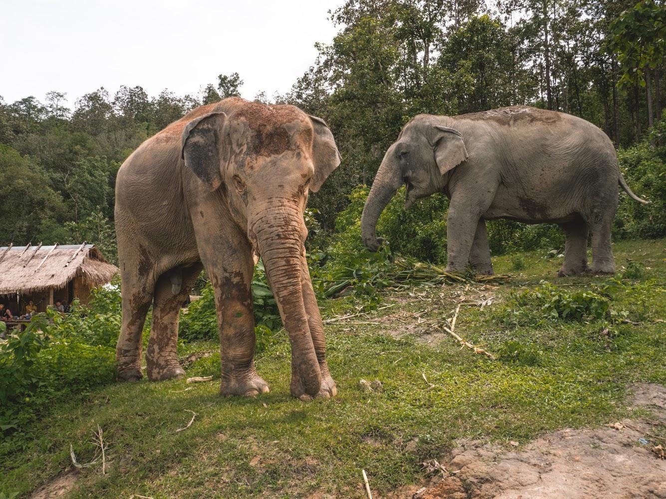 szolgalelkű óriások film elefánt lovaglás etikus Thaiföld