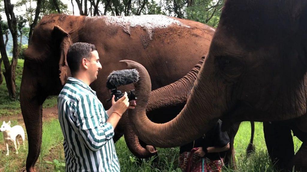 Szolgalelkű Óriások Elefántos film Csapó András