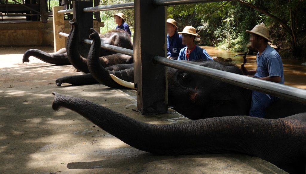 rossz elefánt park