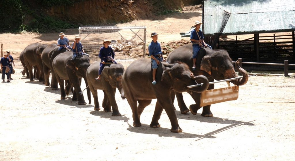 rossz park elefánt show Thaiföld